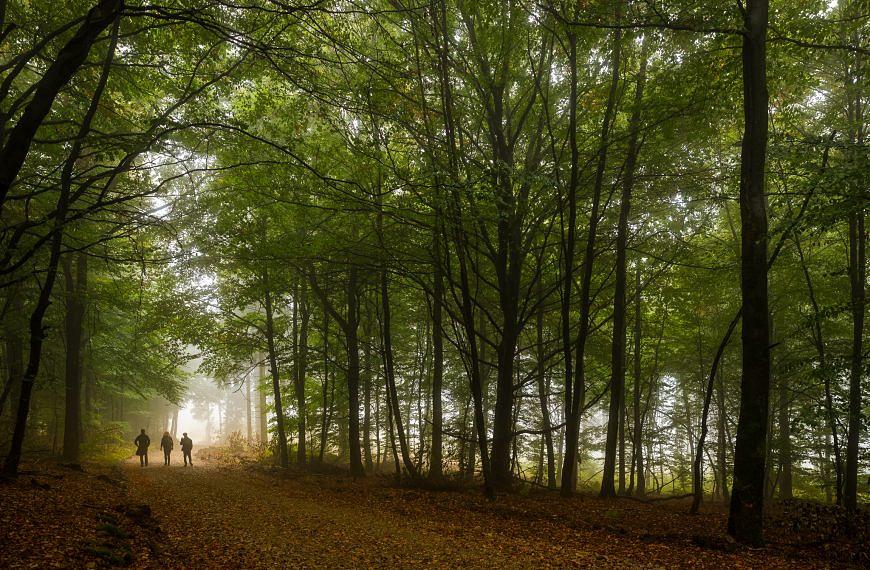 Was der Wald alles kann – die Funktionen des Waldes