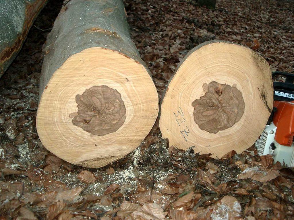 Rotkern der Buche (Foto: Wikipedia)