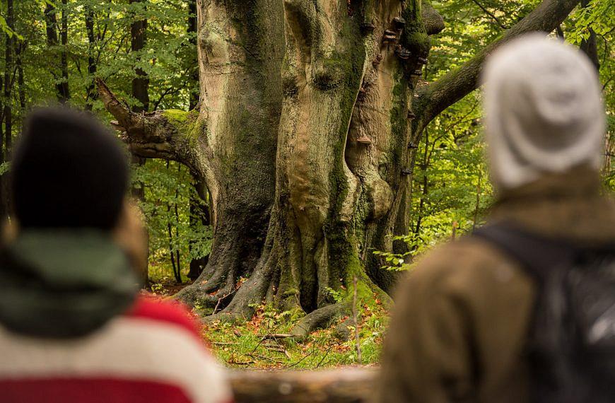 Ausflugstipps: Der Urwald an der Sababurg