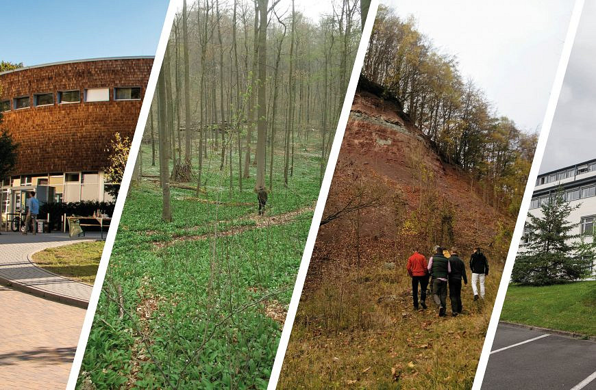 Forst studieren in Deutschland – Möglichkeiten und Wege zum Forststudium