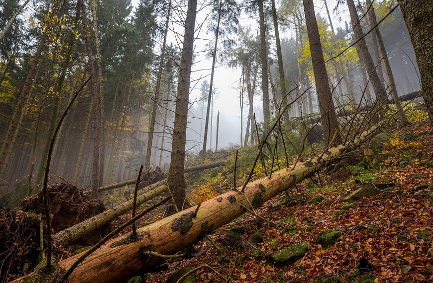 Verhalten im Wald und in der Natur
