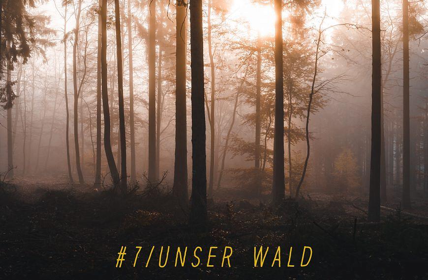 Forst erklärt zum Anhören – Part III