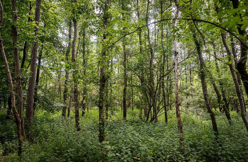 Neues von Forst erklärt: Der Wald im Radio