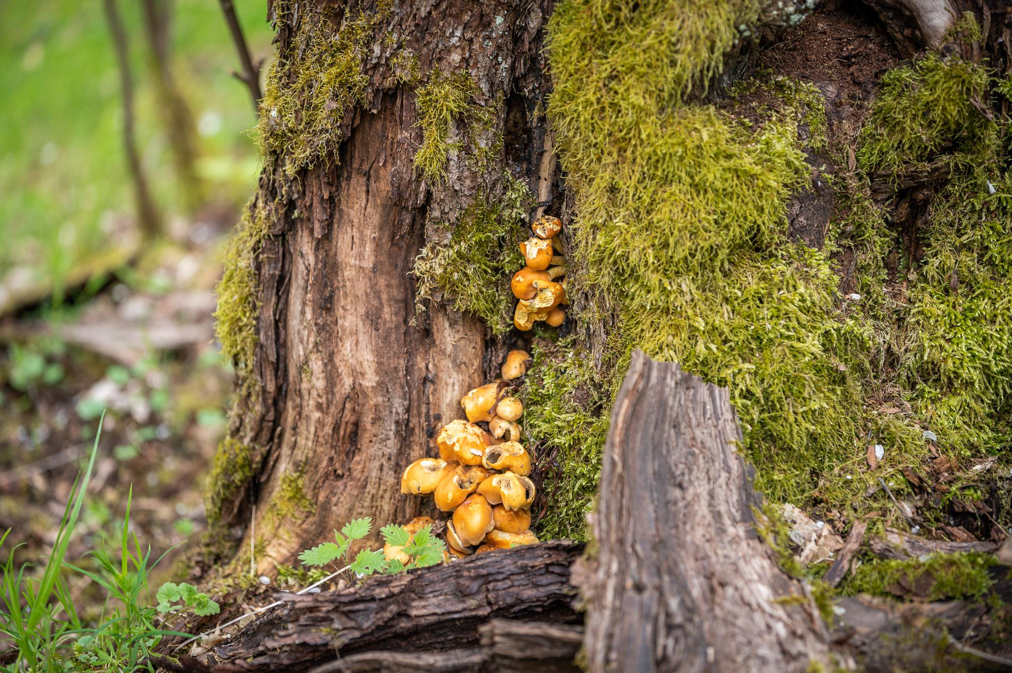 Ein Wald voller Leichen? – Wie Totholz unsere Wälder belebt