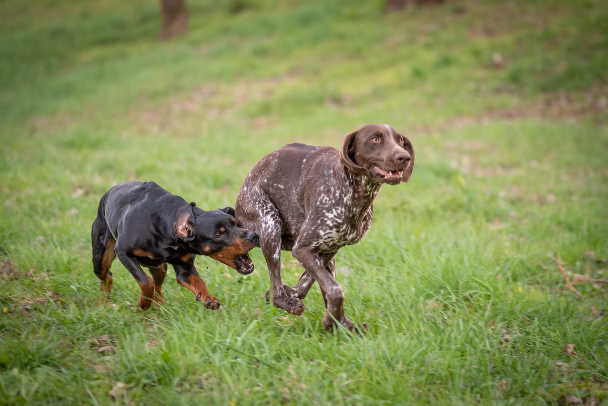 """Jagdhunde, denn """"Jagd ohne Hund ist Schund"""""""