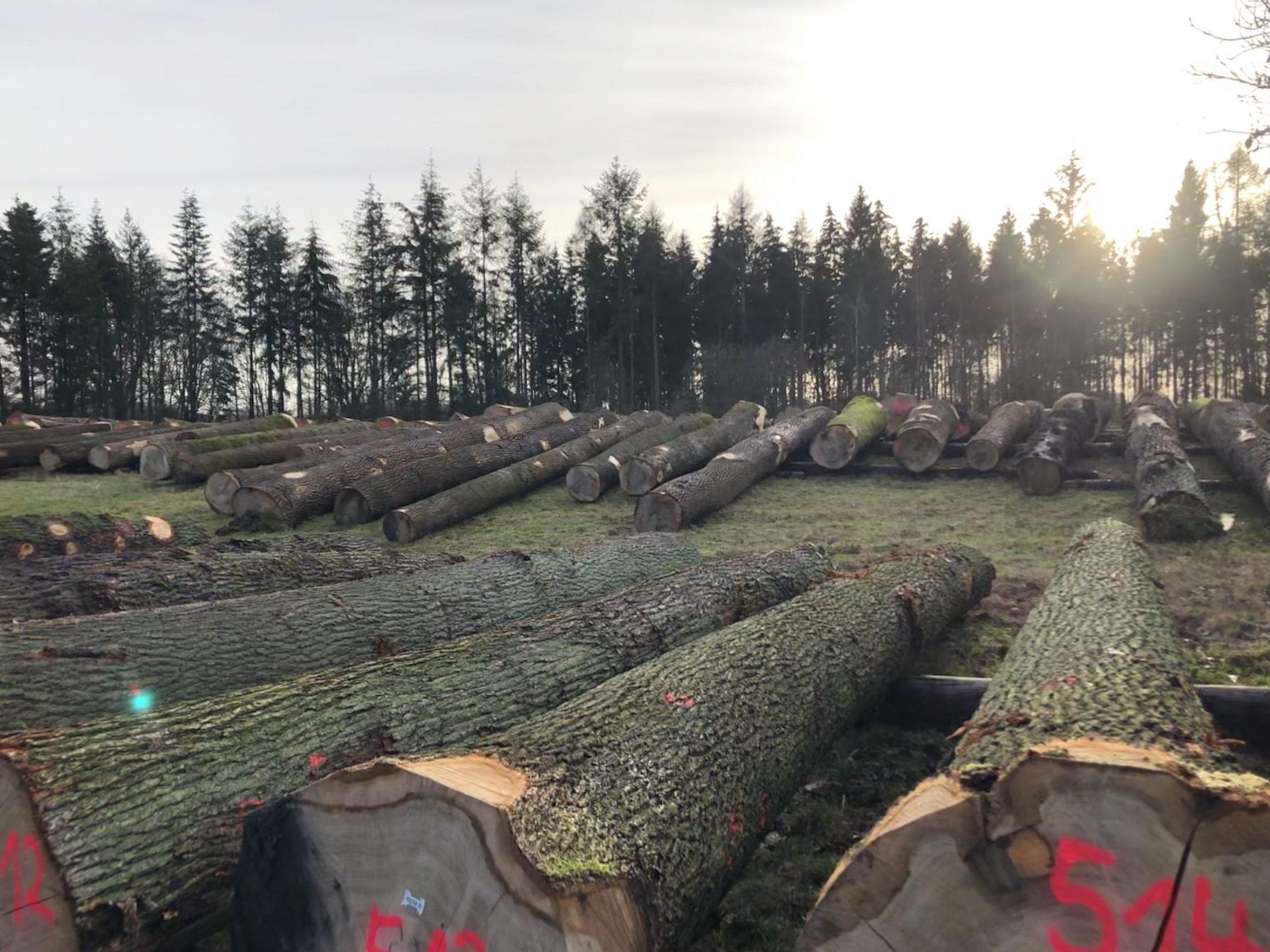 Wie man mit Holz Geld verdient
