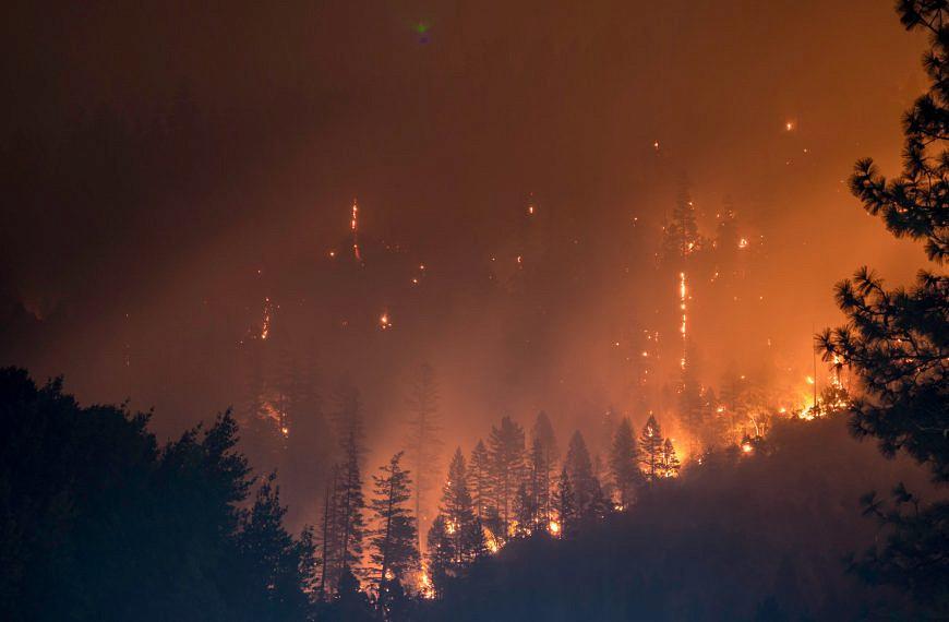Gefahr: Waldbrand – von Erdfeuern bis Wipfelbränden