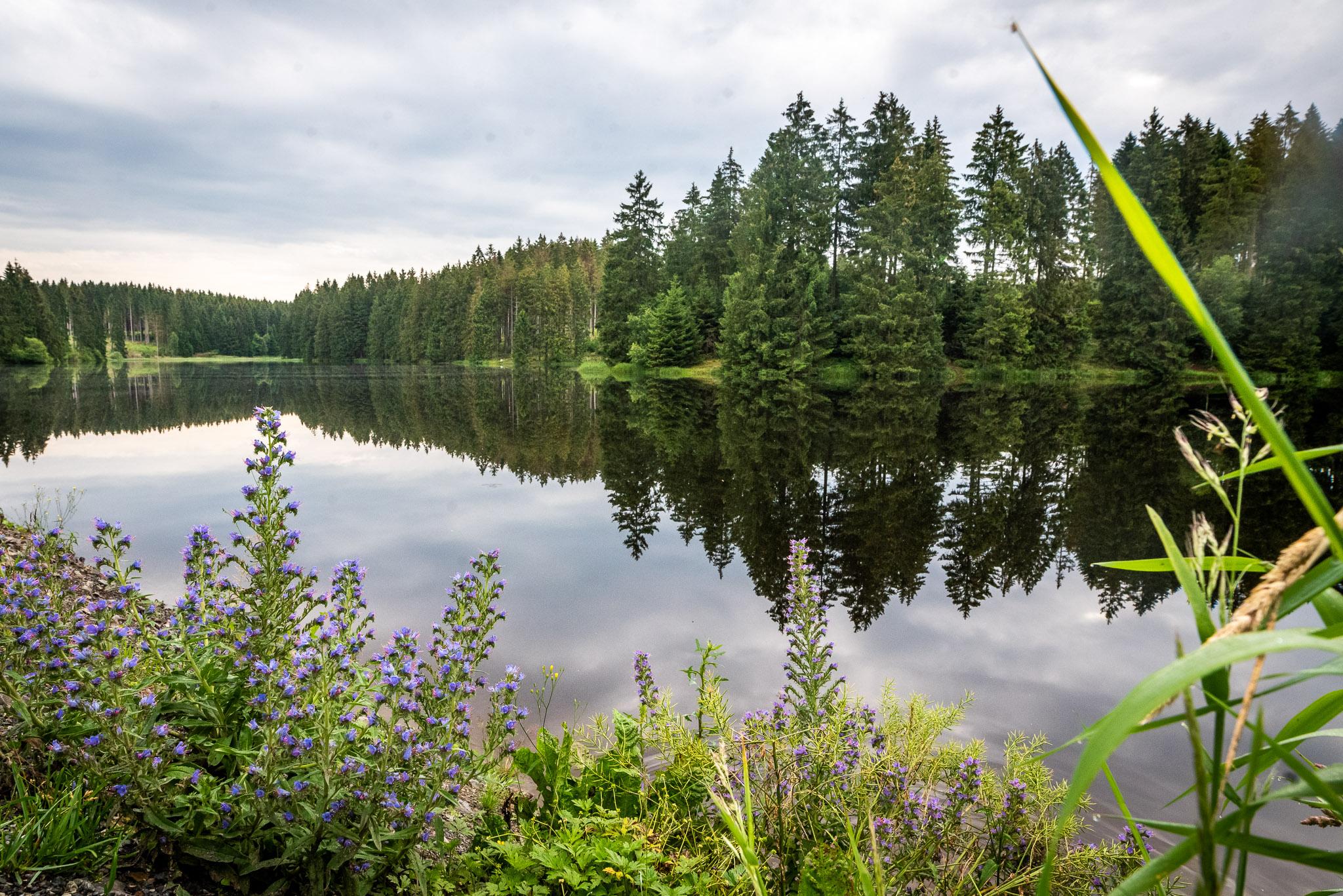 Wasser für den Wald – wie Waldboden Wasser speichert