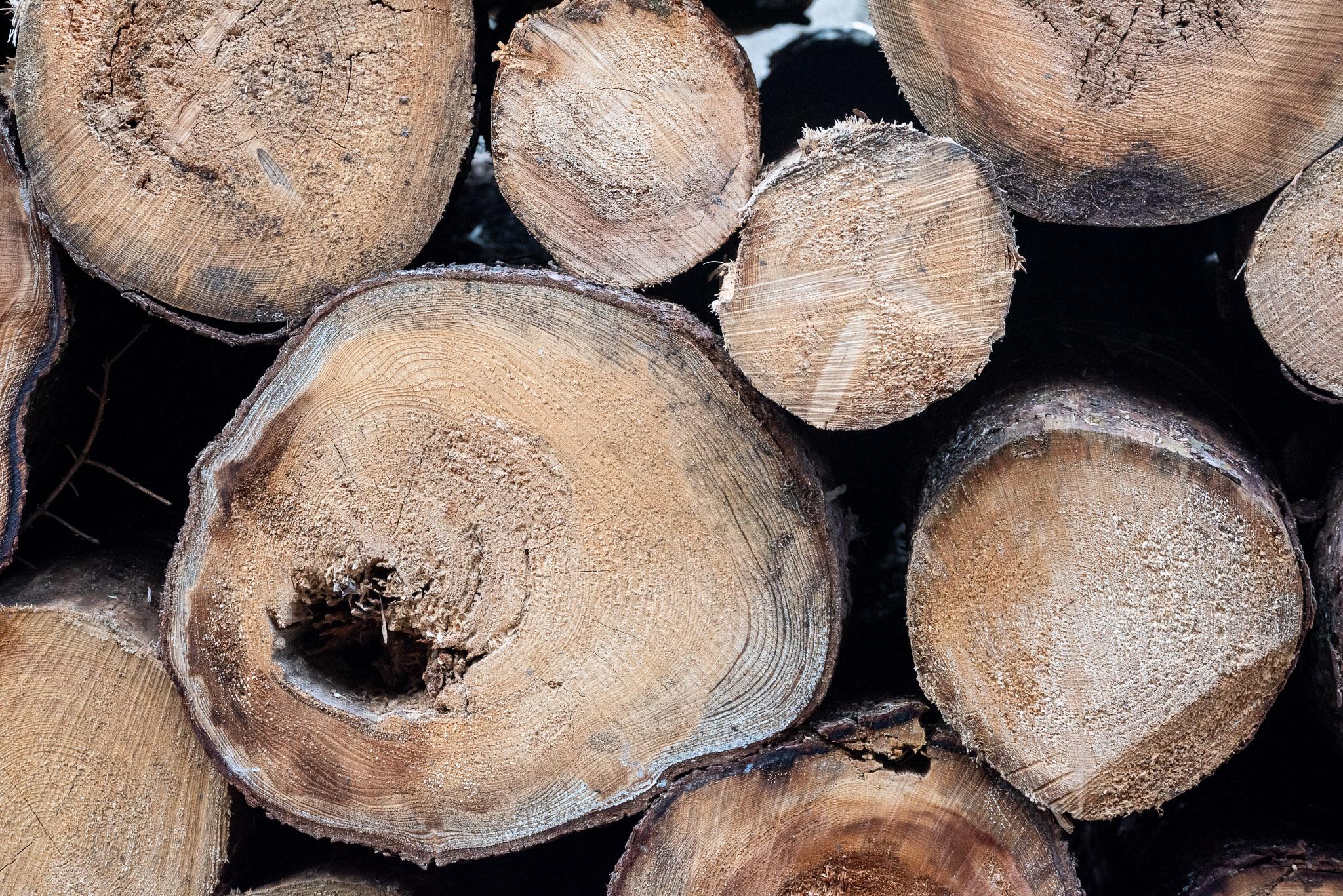 Wie viel ist ein Baum wert? Holzaushaltung nach RVR