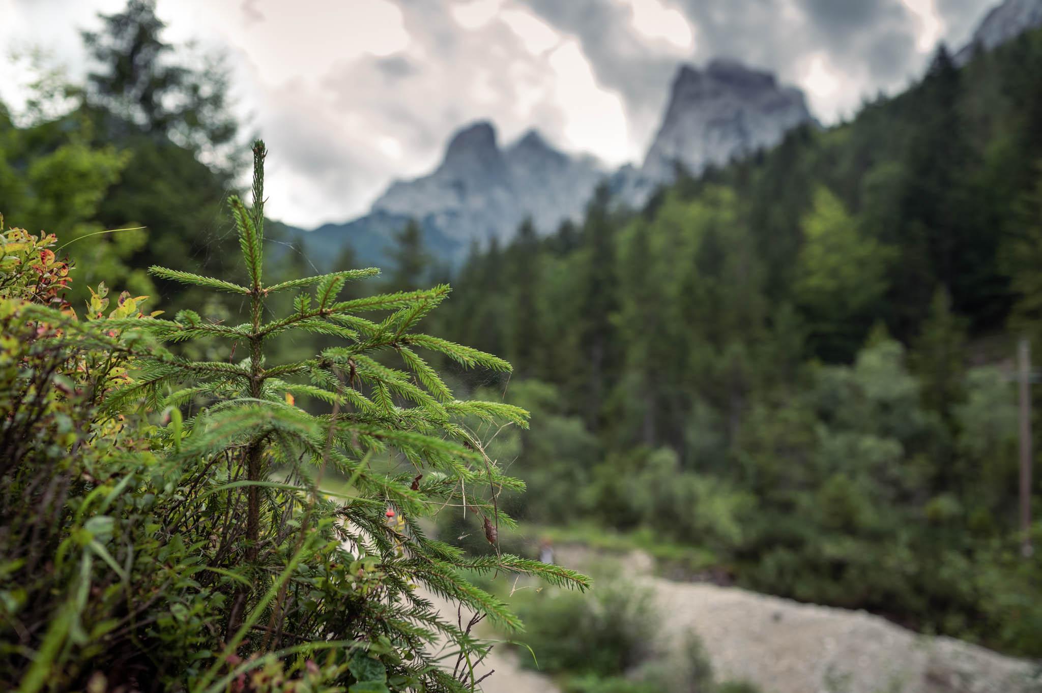 Berge, Täler und Wälder