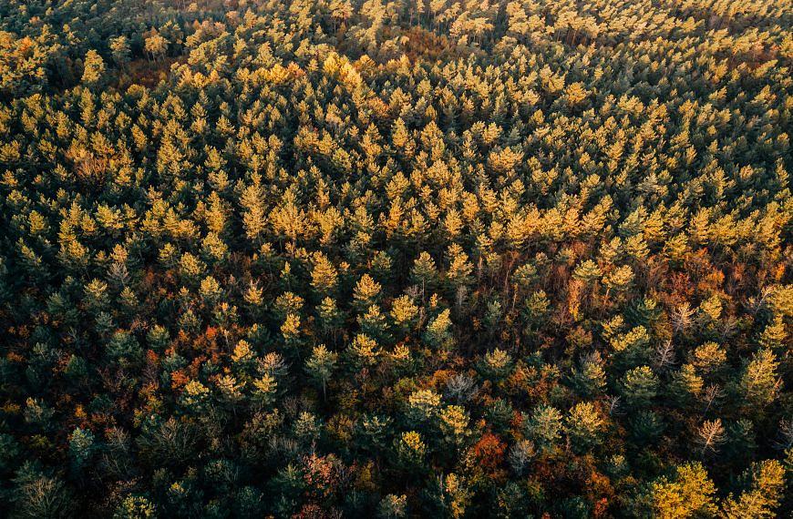 Fremde Baumarten – Rettung oder Gefahr?